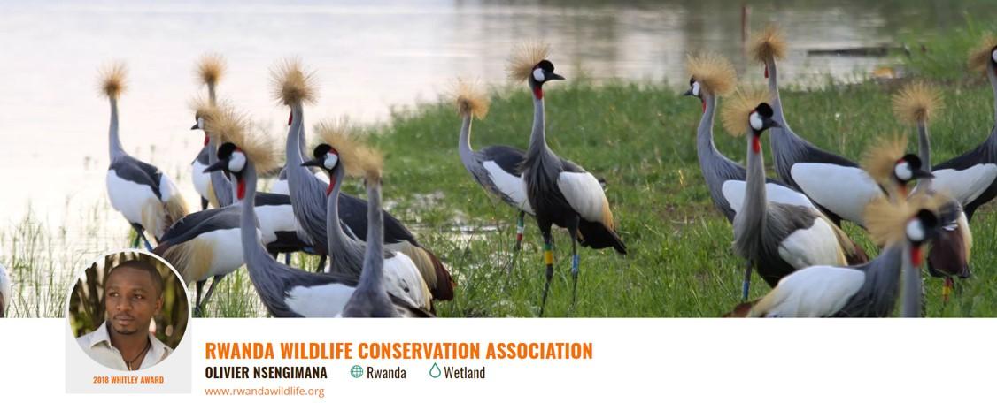 Conserving Rwanda's emblematic crowned crane