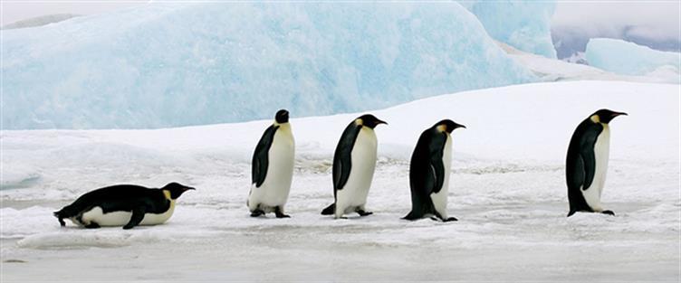 pinguin math