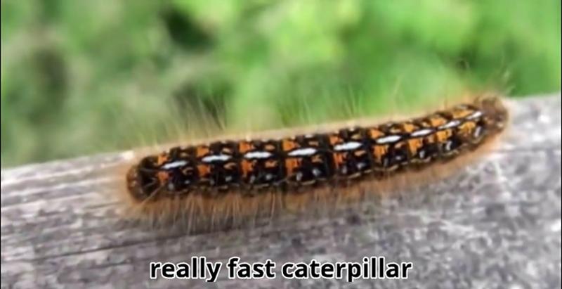 really fast caterpillar