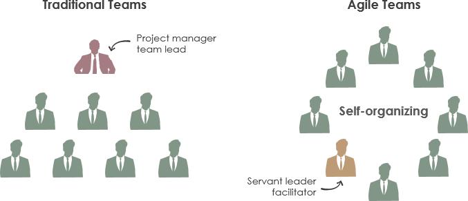 team organisations