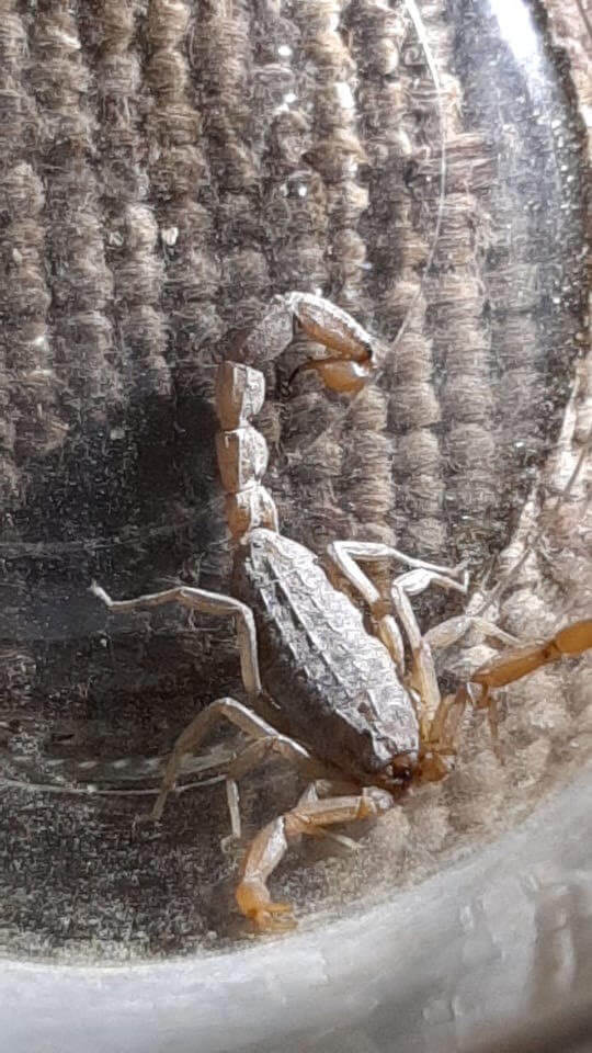 12: A scorpion found under a bed in Samos refugee camp, Greece, May 2020