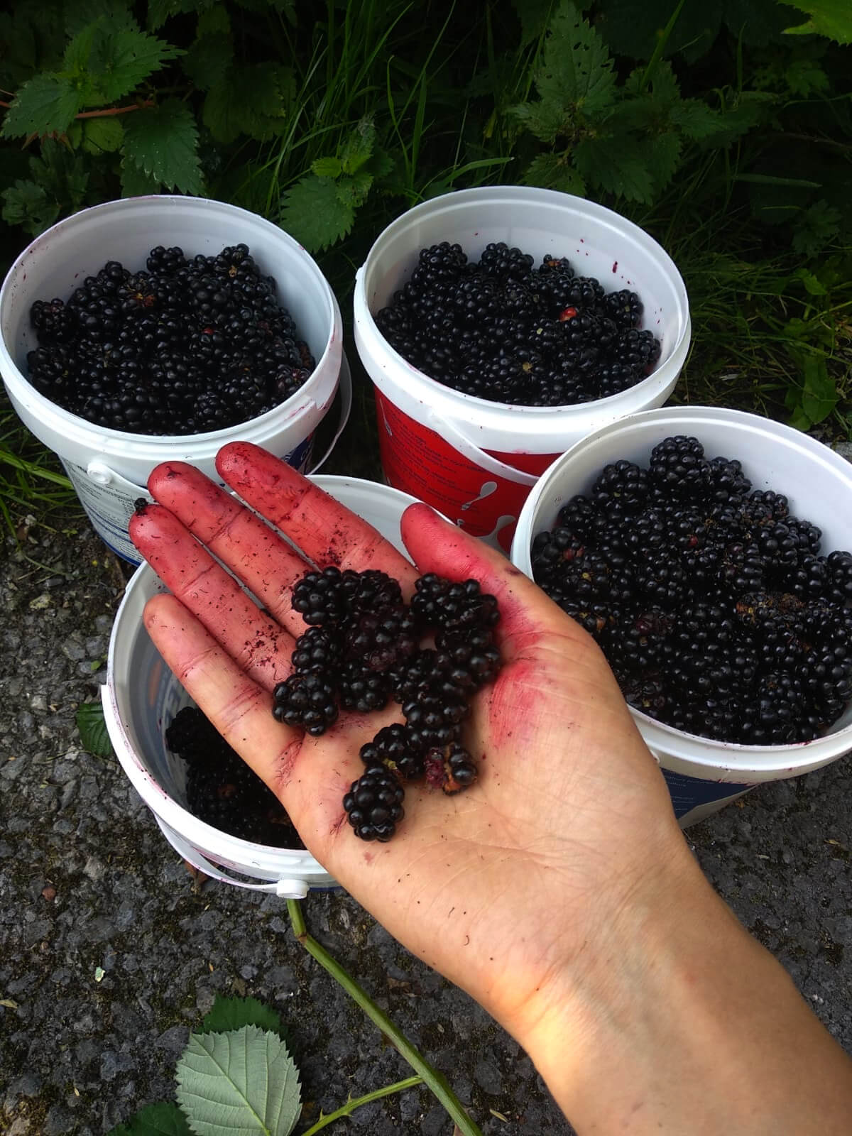 01: A family of asylum seekers are suffering under lockdown, but have found that making blackberry jam and sharing it with neighbours keeps them going