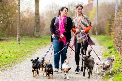 228987-675x450-Dog-walkers-walking-dogs