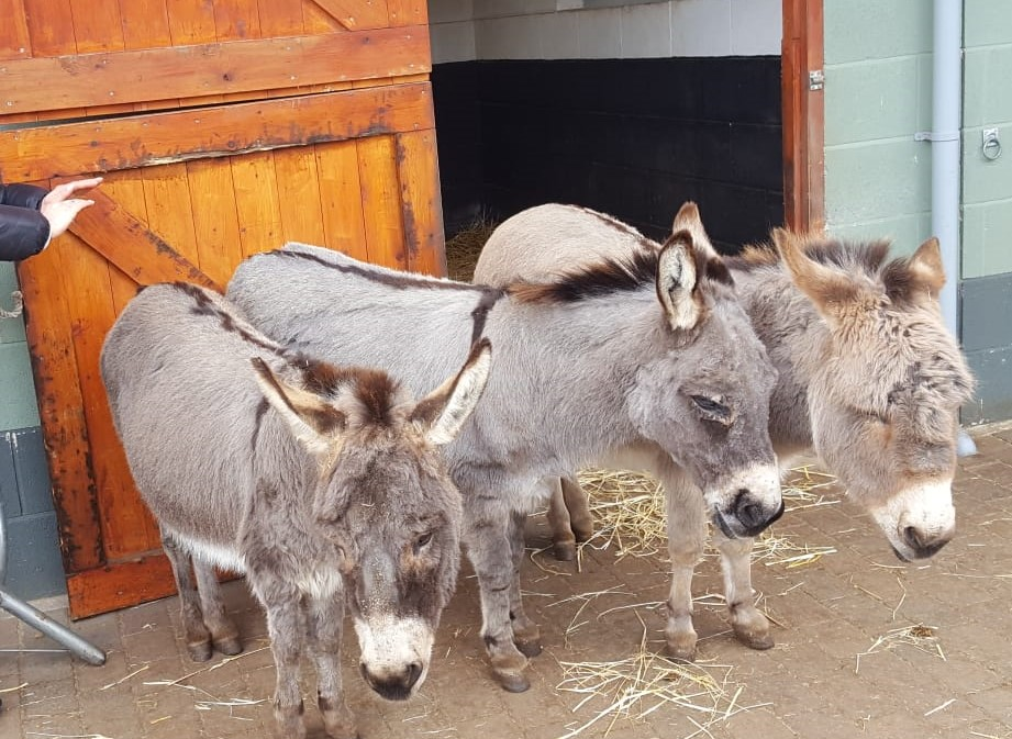 Donkey's Taking Some Time For Rest & Relaxation