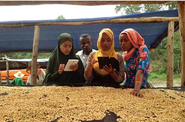 TechnoServe - DIGITIZING COFFEE AGRONOMY TRAINING & MONITORING