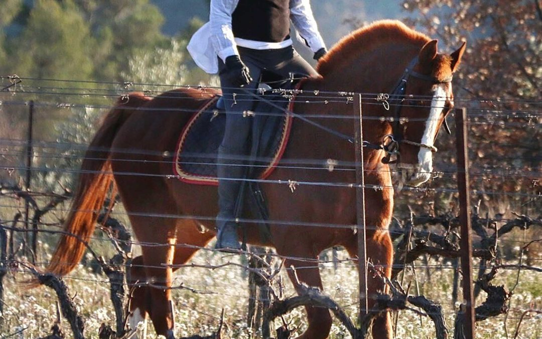 Equestrian Tours of Le Luberon-Provence Summer 2017