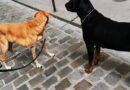 World Day Against the Abandonment of Pets