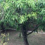 10 Casa Leon - Fruit trees in Garden