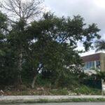 2.- Terreno Ceiba - side view
