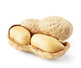 01-Peanuts Nut from Chisen Group-Deder TARIM