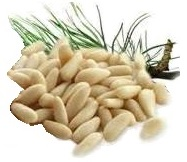 02-Pine Nuts from Chisen Group-Deder TARIM - DederFood