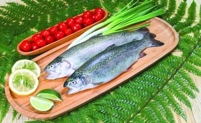 22- Whole Round Rainbow Trout Sea Food from Chisen Group- Deder