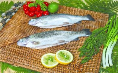 23- Head On Gutted Rainbow Trout Sea Food from Chisen Group- Deder