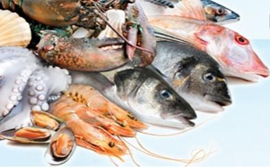 35- Sea Fish Bluefish, Anchovy, Bonito, Horse Mackerel, Red Mullet, Whiting Sea Food from Chisen Group- Deder