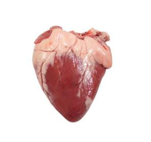 18.14- Lamb offal. A heart from Chisen Group