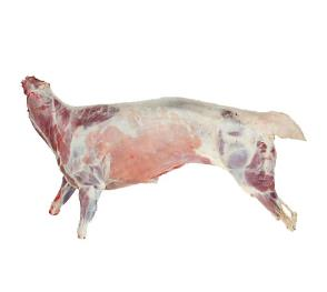 18.20-Mutton frozen in carcasses from Chisen Group
