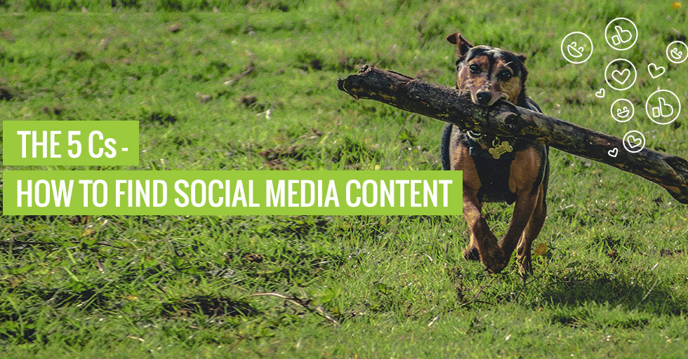 "A dog fetching a stick. Text reads ""The 5 Cs - How to find social media content""."
