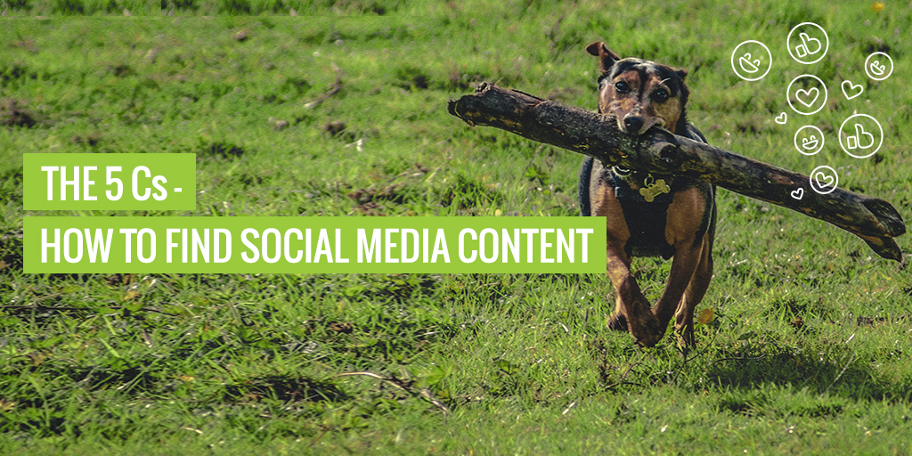 """A dog fetching a stick. Text reads """"The 5 Cs - How to find social media content""""."""