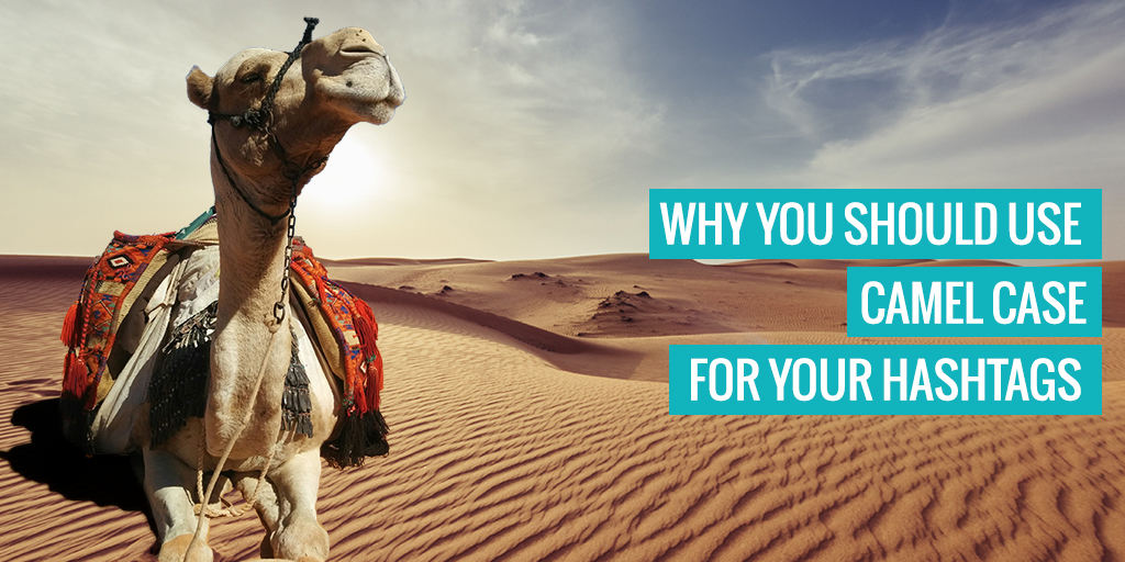 """A camel. Text reads """"Why you should use camel case for your hashtags"""". you should use"""