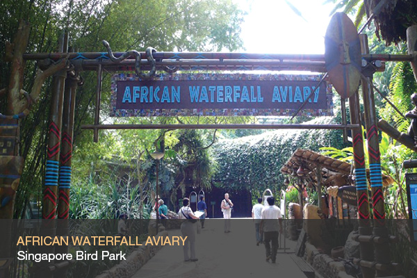 AFRICAN WATERFALL AVIARY @Singapore Bird Park