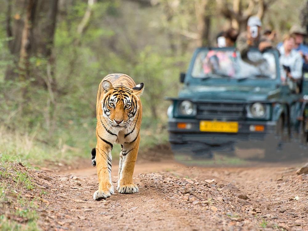 renaming-corbett-tiger-reserve