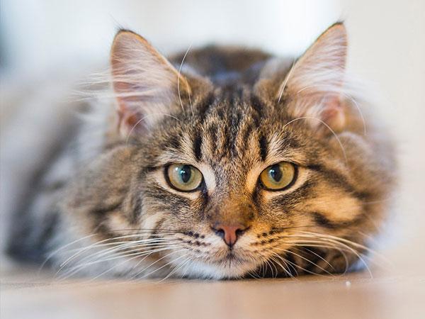 raw-diet-cat