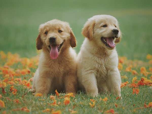 raw-diet-dogs