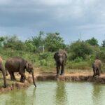 Sri Lanka Rally | Day 5 | Yala to Udawalawe | Bespoke Rallies