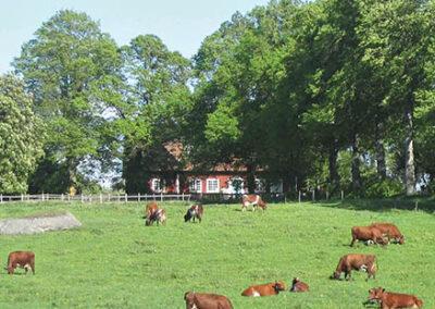Träntorps gård