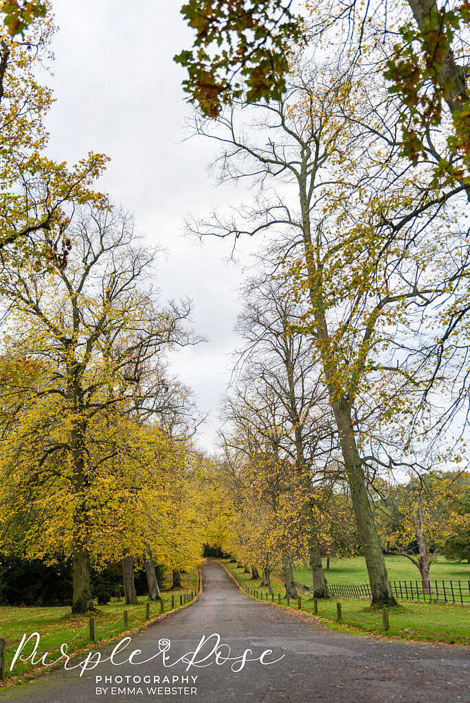 Tree lined driveway to Kelmarsh Hall Northampton