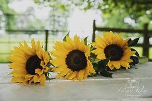 Sunflowers at Woughton \House