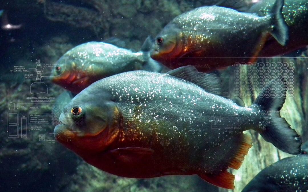 banner-piranha