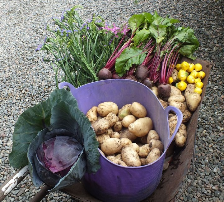 Allotment Vegetables