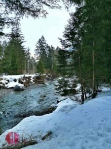 Im Wald bei der Skateline mit Blick auf die Albula