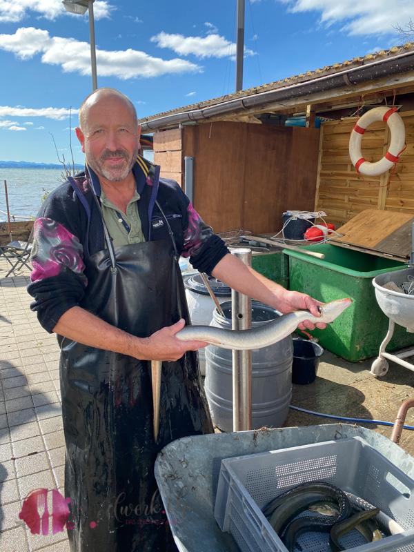 Aal und Fischer am Bodensee