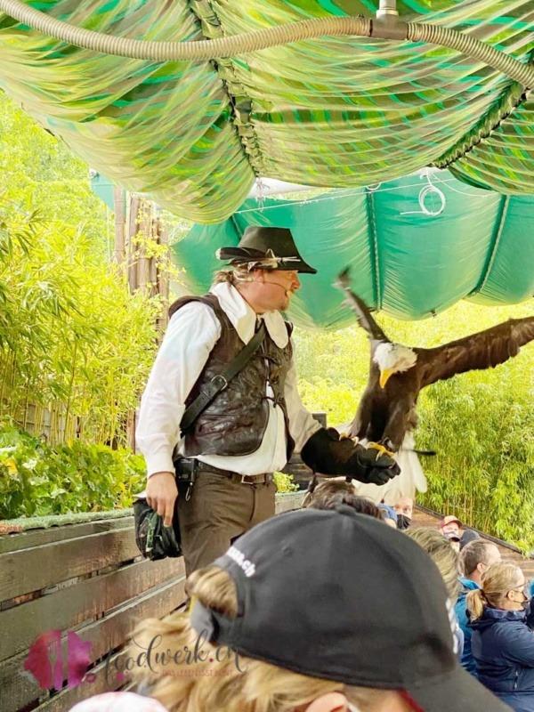 Weisskopf Seeadler auf der Hand des Falkners