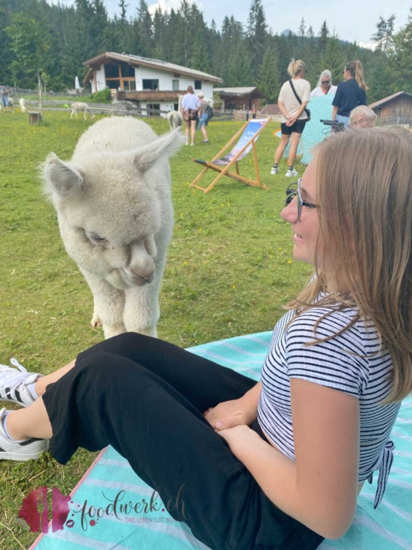 Alpaka zu besuch bei Liv
