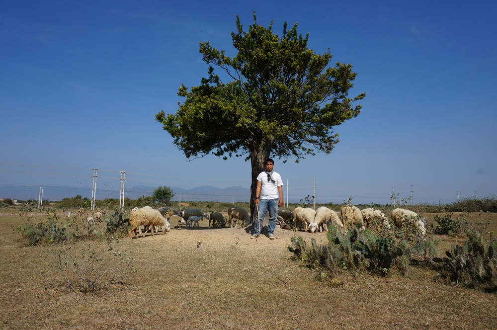 Đồng cừu Phan Rang