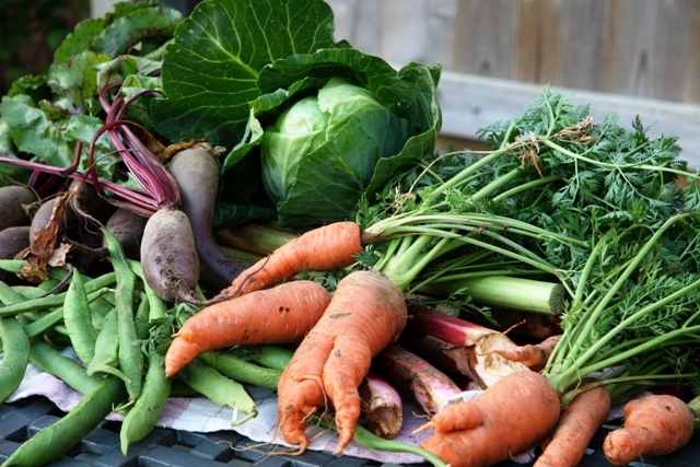 Improving your Health by Eating Organic Food : The Dirty Dozen & Clean 15
