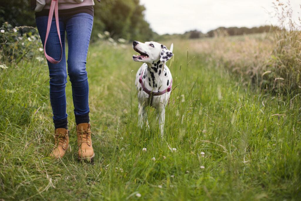 spotty dog walk