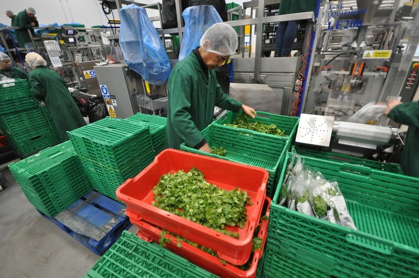Image of worker at R&G herbs loading the herbs for packaging.