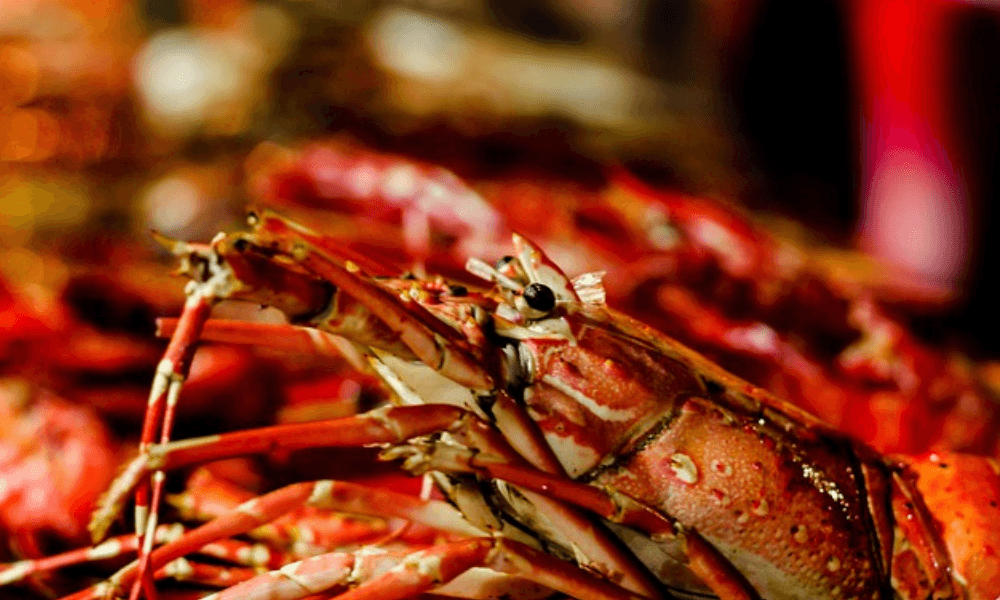 Image of a lobster.