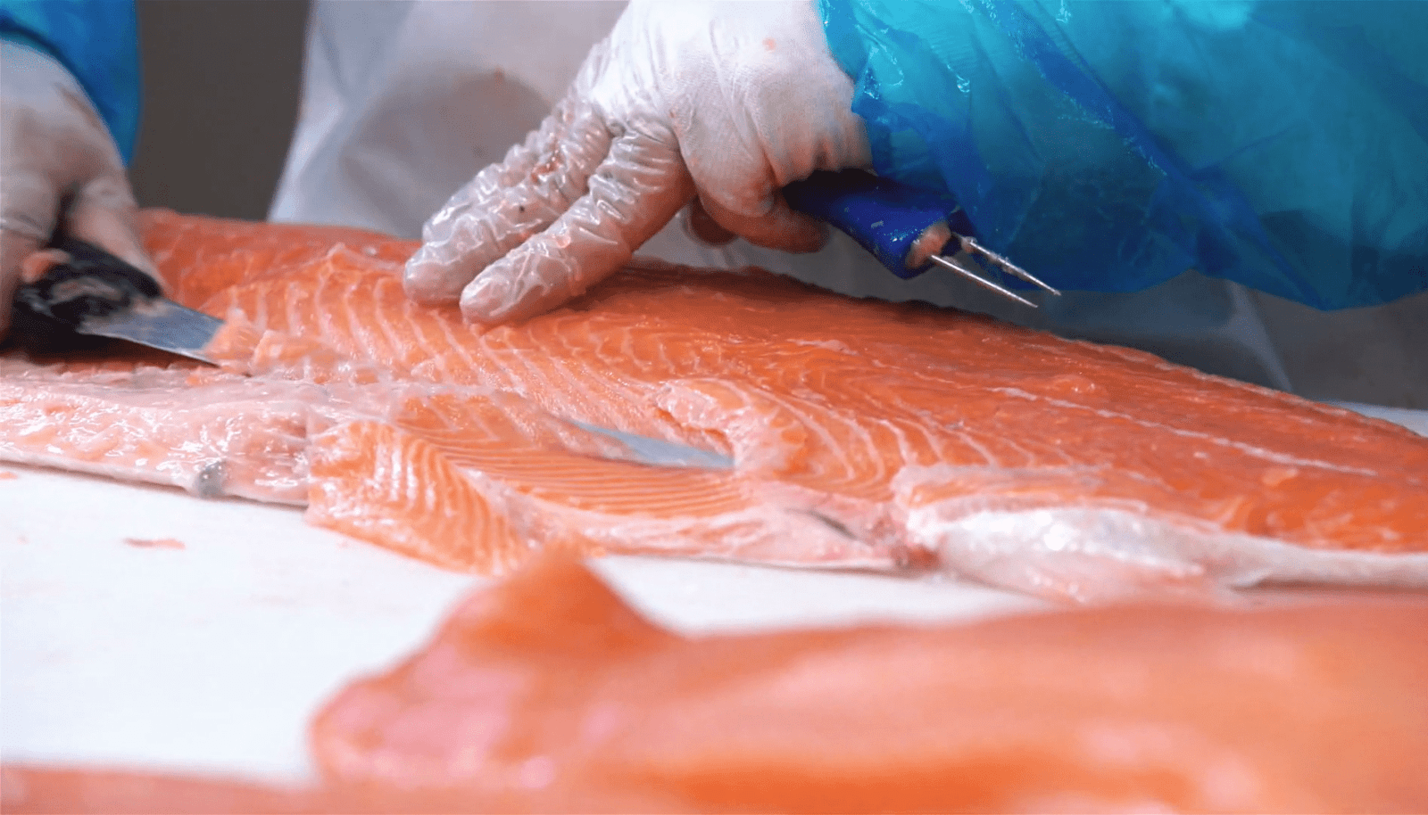 How fish processing throughout can be improved with real-time data