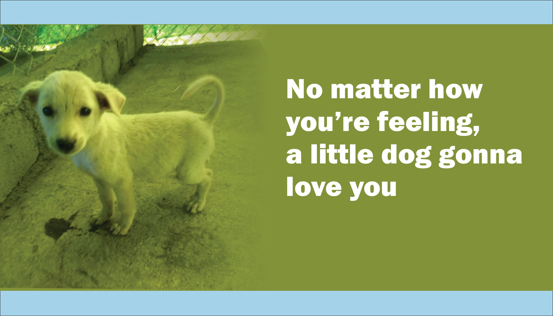 No matter how you're feeling, a little dog gonna love you