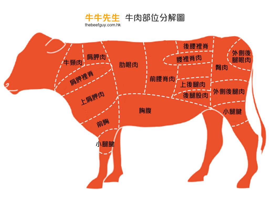 牛肉部位分解圖