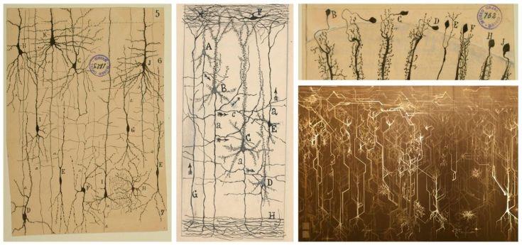 Brain processes