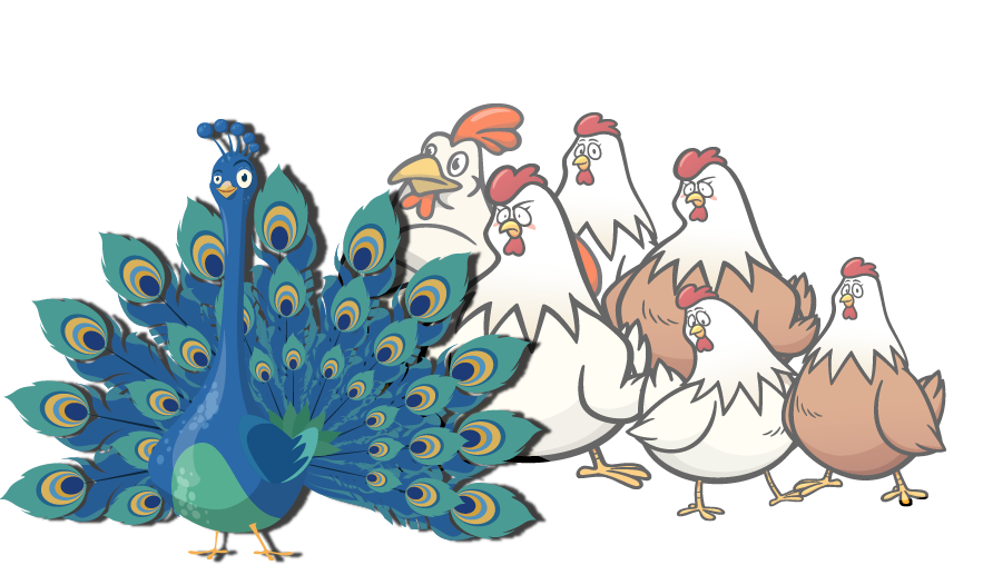 peacock and chickens