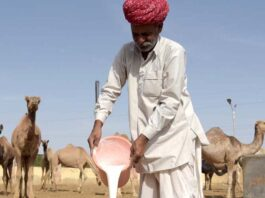 National Camel Research Center Bikaner,