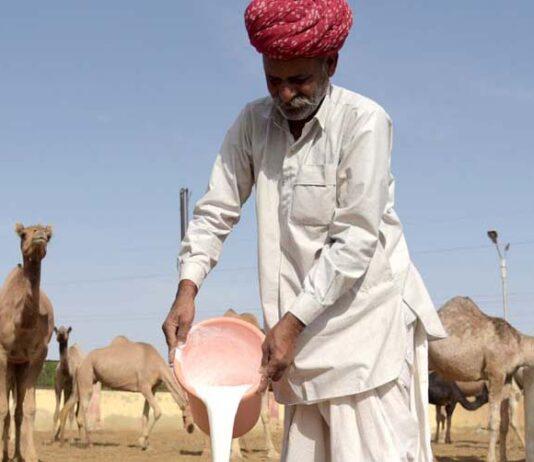National Camel Research Center Bikaner,