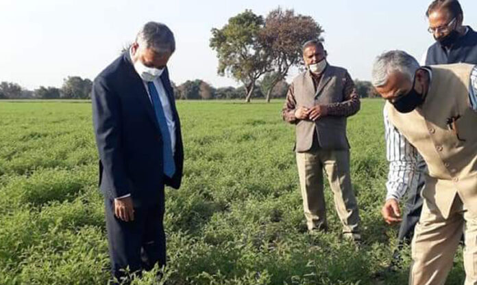 Woolen waste is better than dung and other fertilizers for vegetable production in sandy areas: Vice Chancellor
